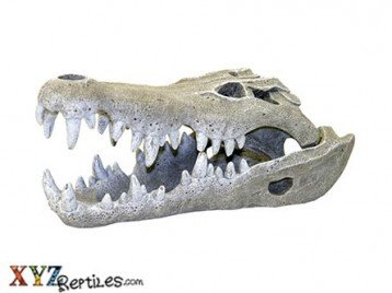 Nile Crocodile Skull Snake Hide