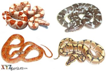 snakes for sale online
