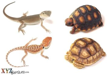 reptile pets from around the world