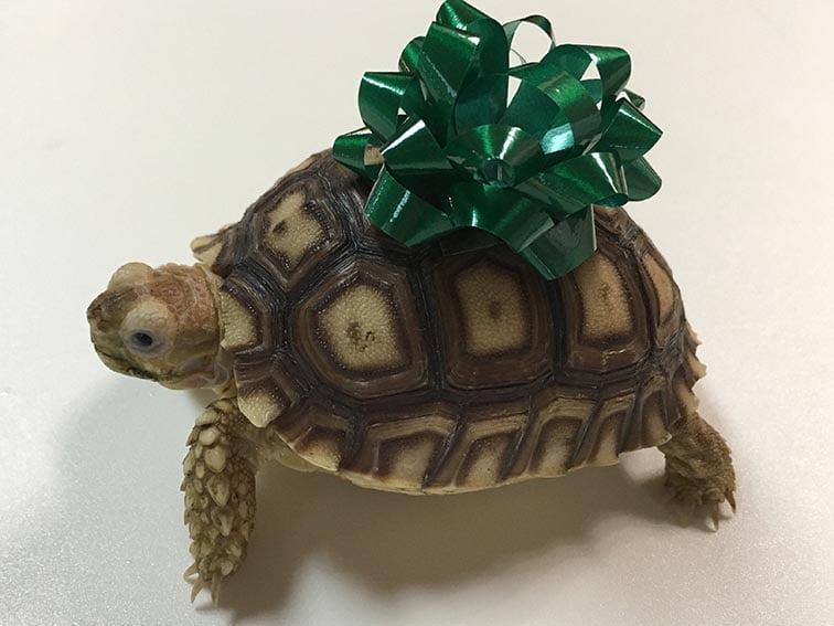 Reptile Shipping