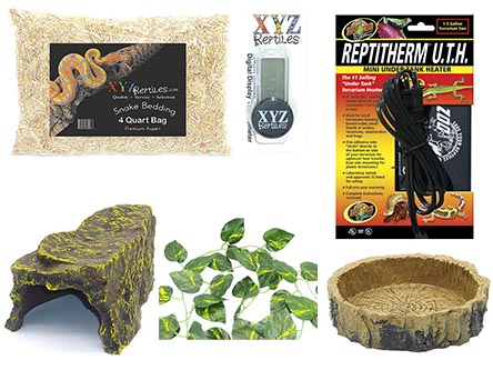 xyzreptiles Jungle reptile vine