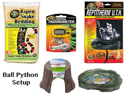 ball python setup