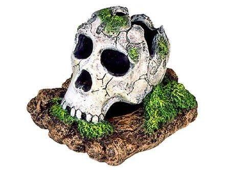 broken skull snake hide