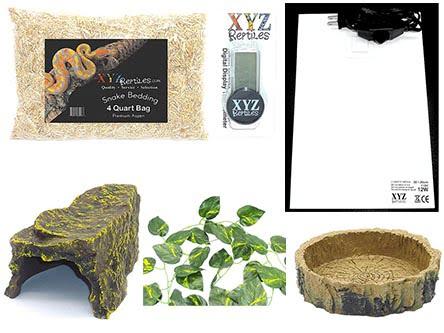 xyzreptiles Jungle reptile vine