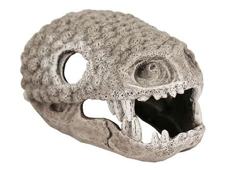 gila monster skull snake hide