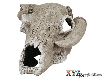 Broken Steer Skull Snake Hide