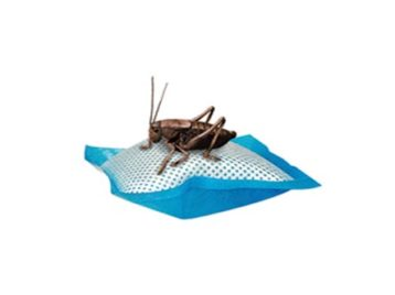 cricket-water-pillow-2