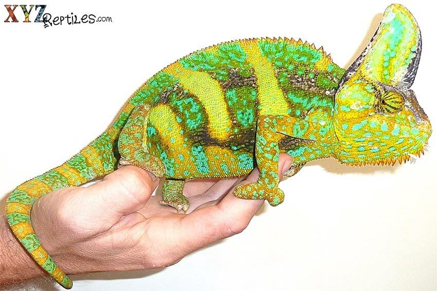 reptile pet benefits