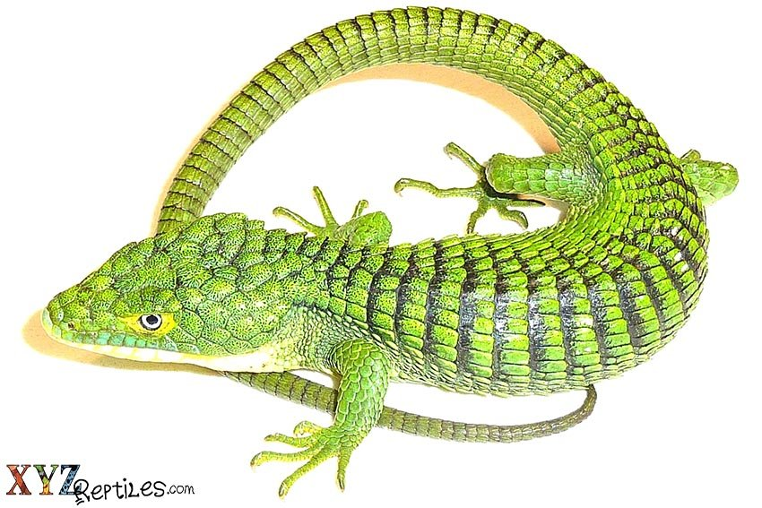 history of lizards