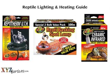 reptile lights