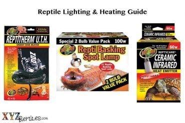 reptile lights