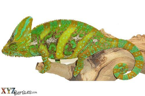 essentials for reptile habitat