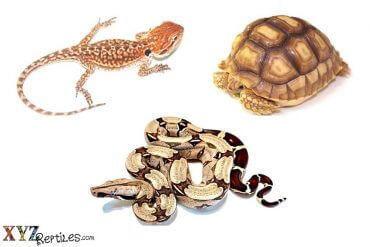 reptiles for sale blog March 18