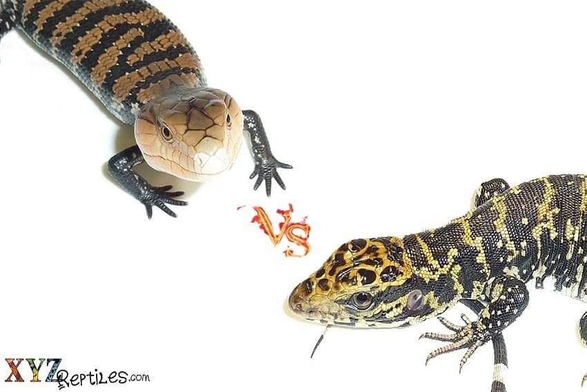 comparing reptiles for sale