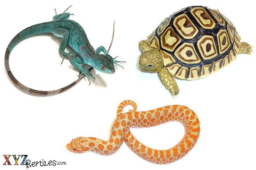 online reptile store