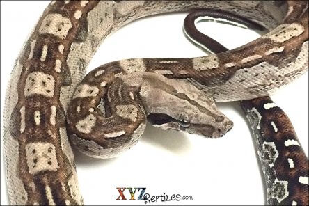 how to house boas for sale