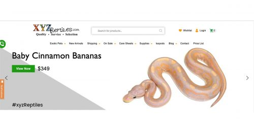 Reputable Places To Find Exotic Reptiles For Sale Online