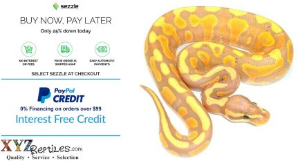 buying exotic reptile pets online using payment plans