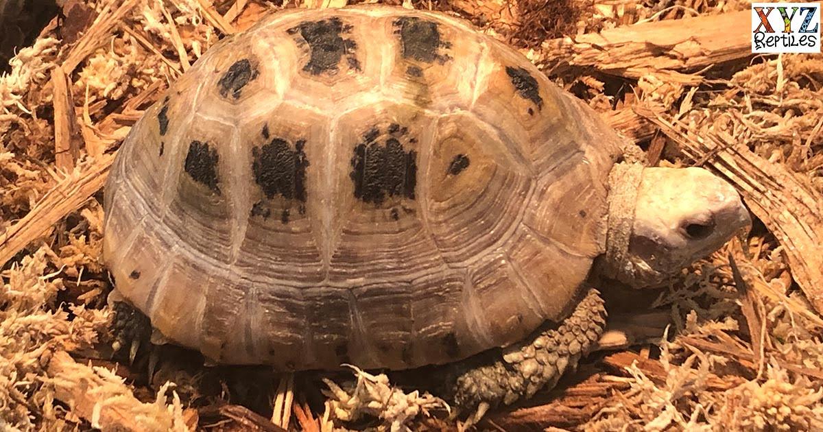 finding a proper tortoise heat lamp