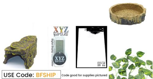 free shipping reptile supplies