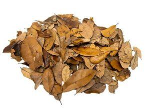 live oak leaf