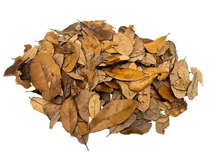 Live Oak Leaf Litter