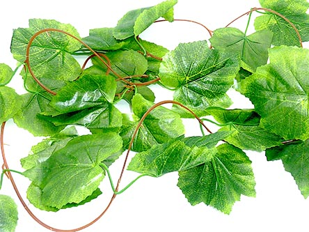 grape leaf reptile vine