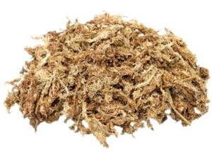 long fiber sphagnum moss