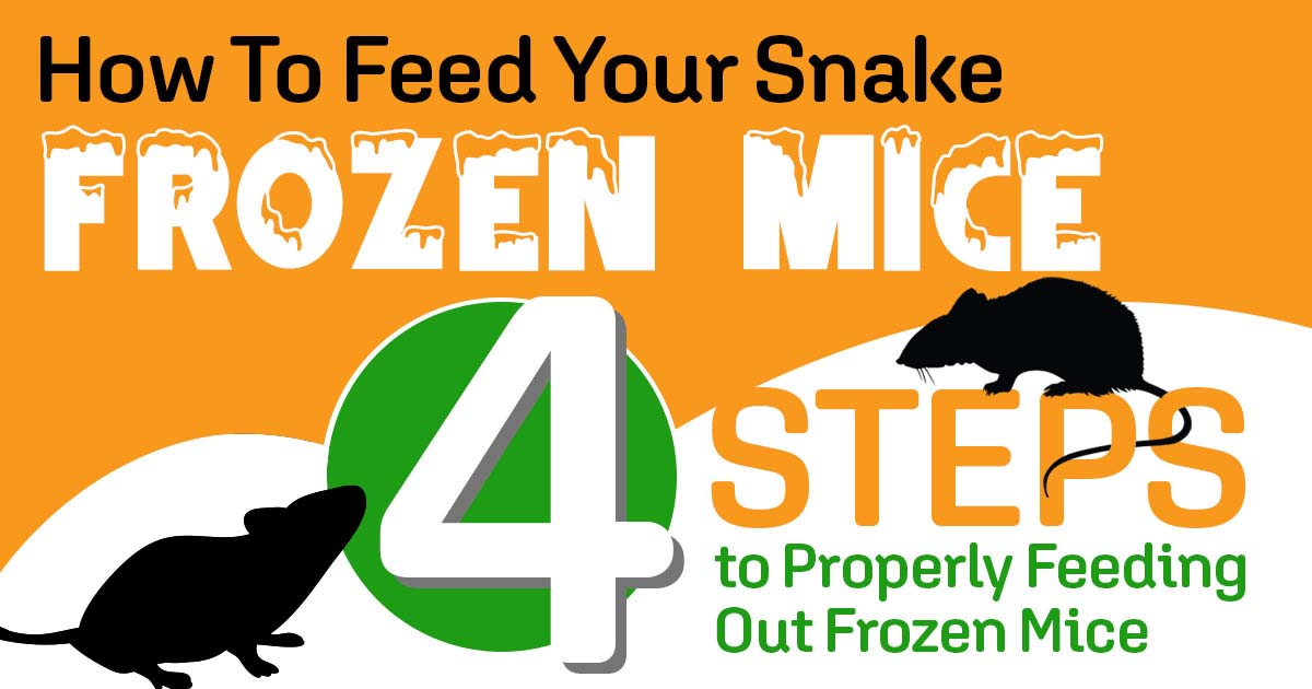 How To Feed Your Snake Frozen Mice